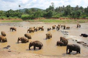 pérdida de equipaje en Sri Lanka