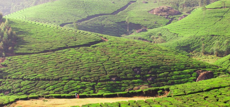 viajar a la India en agosto