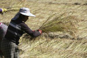 Viajar con medicamentos a Bután